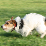 How do I stop my dog chasing?